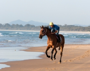 Racehorse on the beach