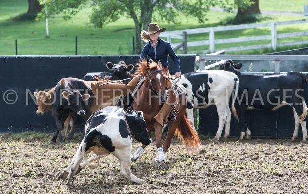 Dorrigo - Australian Horse Cutting & Youth Group